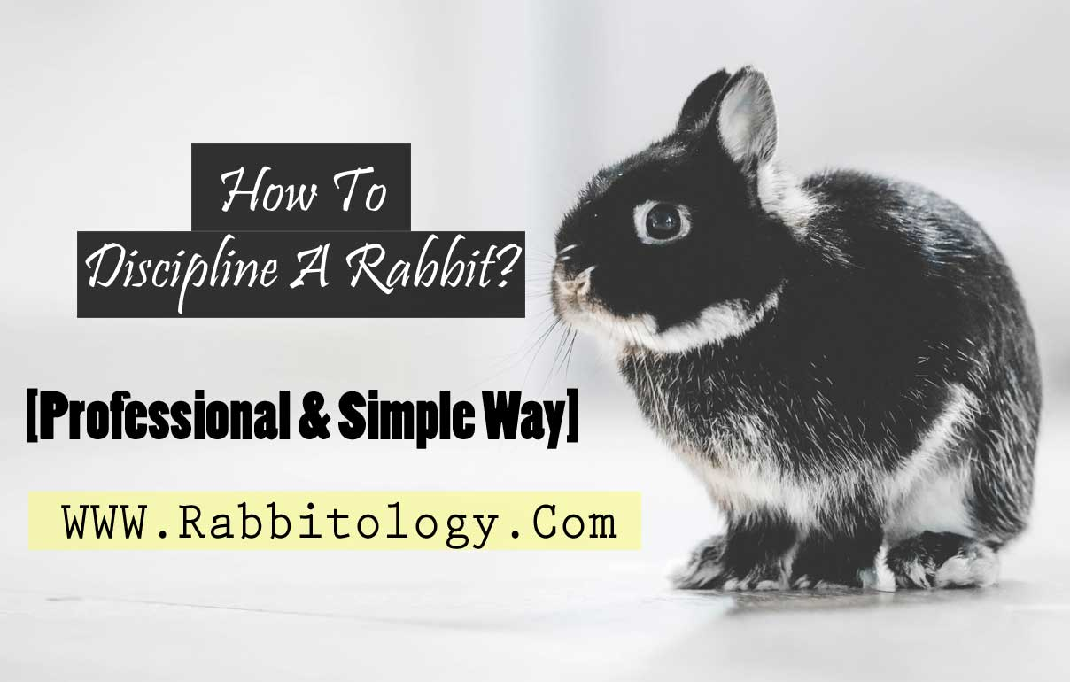 How-To-Discipline-A-Rabbit