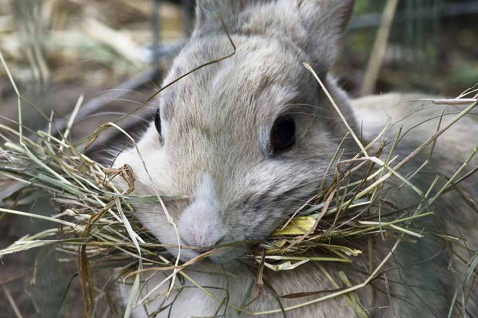 How-To-Store-Hay-For-Rabbits