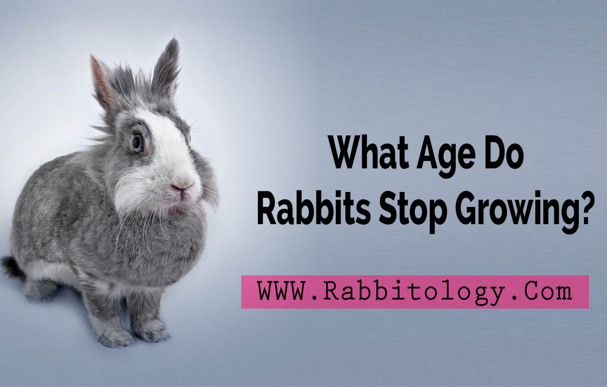 What-Age-Do-Rabbits-Stop-Growing