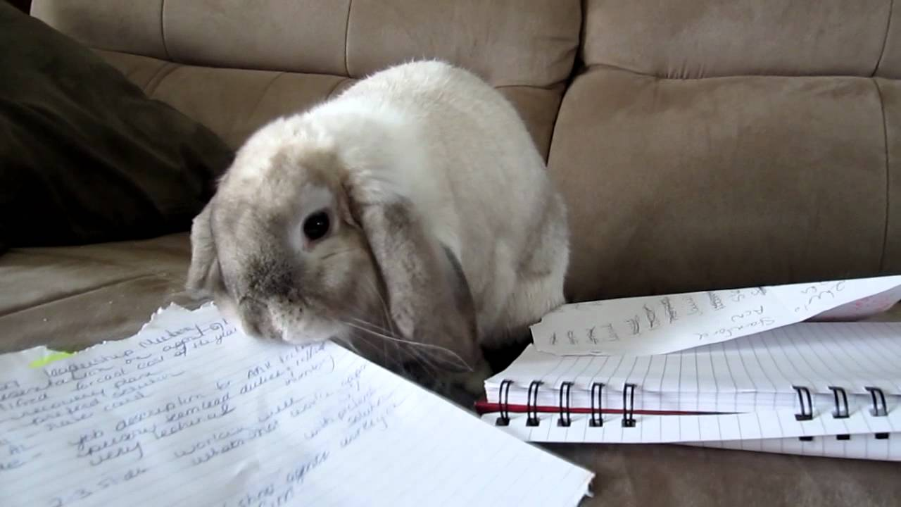 Why-Do-Rabbits-Eat-Paper