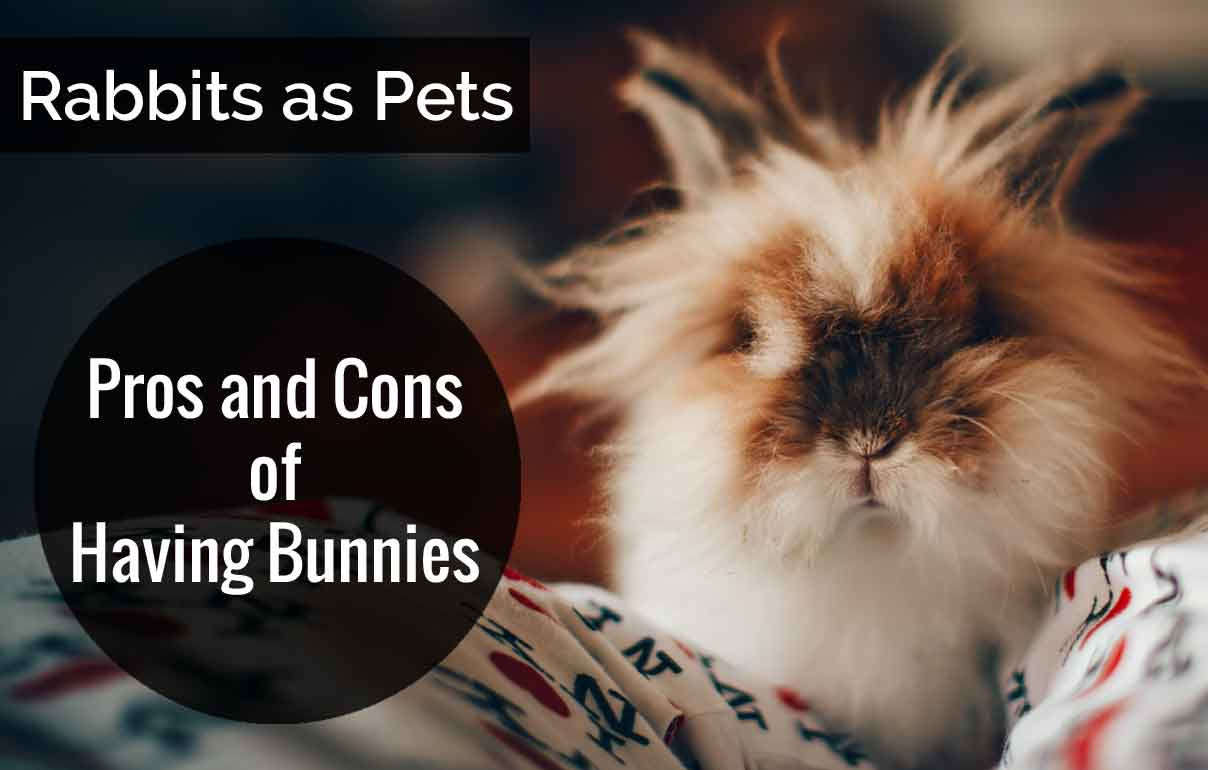 Rabbits-as-Pets