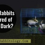 Are-Rabbits-Scared-of-the-Dark