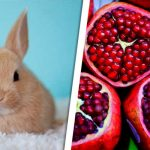 Can-Rabbits-Eat-Pomegranate