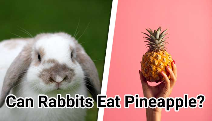 Can-Rabbits-Eat-Pineapple