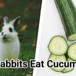Can-Rabbits-Eat-Cucumbers