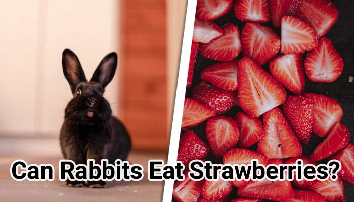 Can-Rabbits-Eat-Strawberries